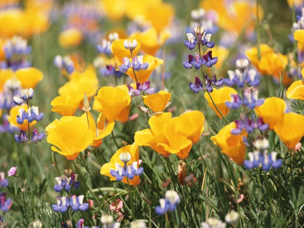Tapety na pulpit: kwiaty - wybrana tapeta